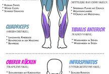 Training nach Muskelgruppen