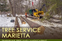 Tree Service / by Timberline and Landscaping