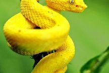 Snakes /Serpi