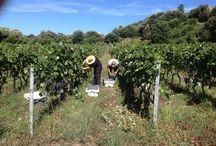 Clos Paoli / Vin Corse