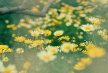 Nature Photography / by Amira Larora