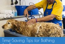 Dog Wash Tips