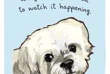 Winifred Sanderson Vella / My puppy
