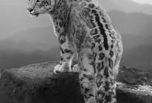 Art | Wildlife fotography