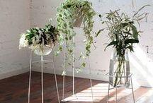 plants, pots, vases, arrangements