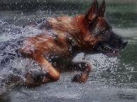 Dogs / всё о собаках