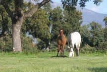 Animales / Conoce la ganadería de la Finca Casablanca