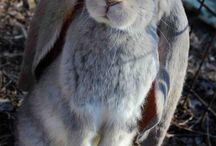 Rakkaat kanit
