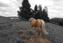 All Horses !