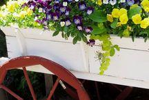 gardening / by Joyce Finn
