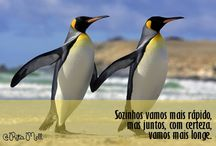 imagens - pinguins