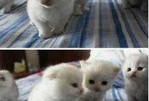 Kitten / by gege momo