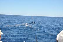 Pesca Oceânica no Espírito Santo
