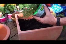 How-To: Gardening  / Get your hands dirty!