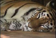 Cute sleeping animals