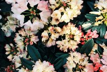 Flora on Film / by Emma Holden