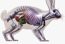 hayvan sağlığı
