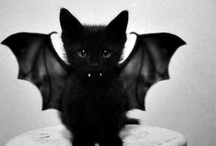 Cat Costumes / Cats in costumes - for Halloween or just any ordinary day of the year