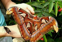 Beautiful insects & animals