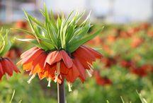 değişik bitkiler / güzel bitki