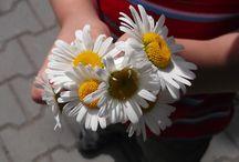 Moja pasja KWIATY / Kwiaty które kocham.