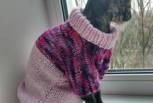 Sphynx jumpers