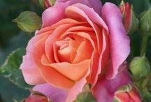 Rose Infused Honey ideas