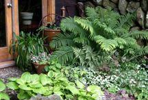 {Outside} Water Garden Ideas