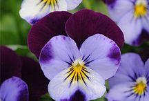 Flores, Plantas y Jardines / by Georgina Ortiz