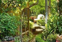 dreamed garden