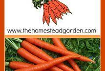 Growing Carrots / Get Growing