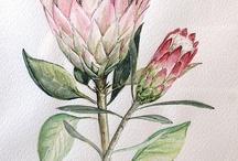 protea painting ideas