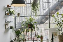 planterior