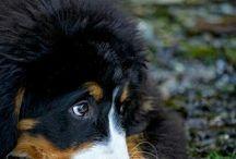 Cutie Dogs