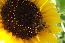 bees, love, & harmony / by Raddish Kids