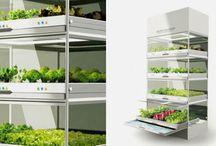 Uprawa roślin w domu - GrowMax