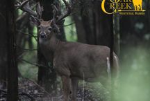 2016 Oak Creek Whitetails / We will post photos of the bucks we see as the season goes on here.