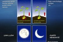 luna para las plantas