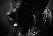 Animal photos by MiljART / Valokuvia eläimistä