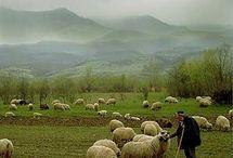 Pastoral Scenes I