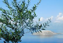 Olive Trees - ancient companions