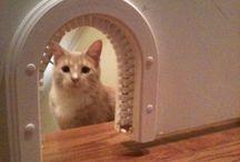 Cats -> Doors