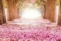 Flower tunnels. / Amazing and fascinating. Flower tunnels. Non stop imagination.