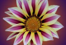 Photoshop by Son Simonis / Foto,s bewerkt in photoshop. Fotografie/bewerking: Son Simonis.   Afbeeldingen stelen is zo zielig en simpel, ga zelf eens met uw camera aan de slag!
