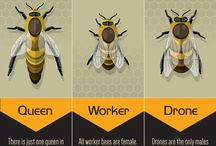Bee Buzz / Sweet facts about our favorite insect