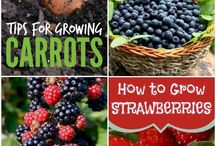 GROW~FRUIT