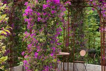 Great Gardens! / by Lorna England