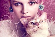 Cats & Editorial