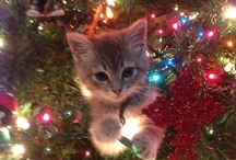 Holiday Kitty / Whats cuter than a Kitty on the Holidays!