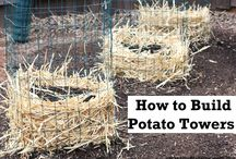 Potato Tovers and pots